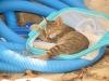 pasha-cats-1