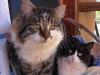 pasha-cats-11