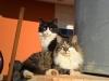 pasha-cats-12