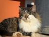 pasha-cats-13