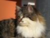 pasha-cats-14