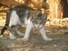 pasha-cats-16