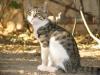 pasha-cats-17