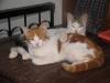 pasha-cats-18