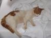 pasha-cats-21