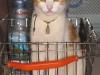 pasha-cats-24