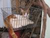 pasha-cats-26