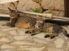 pasha-cats-28