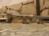 pasha-cats-29