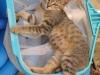 pasha-cats-3