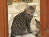 pasha-cats-32
