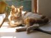 pasha-cats-33