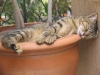 pasha-cats-34
