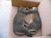 pasha-cats-35