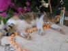 pasha-cats-36
