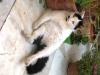 pasha-cats-40