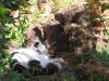 pasha-cats-42