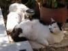 pasha-cats-43