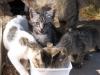 pasha-cats-51