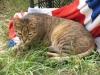 pasha-cats-54