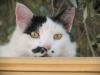 pasha-cats-56