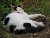 pasha-cats-57