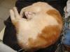 pasha-cats-7