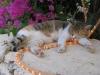 pasha-cats-9