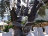 kalkan-wedding-at-pasha-23