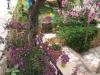 pasha-garden-14