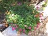 pasha-garden-18