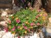 pasha-garden-2
