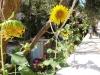pasha-garden-26