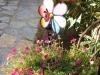 pasha-garden-29
