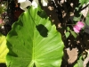 pasha-garden-30