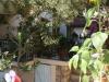 pasha-garden-31