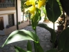 pasha-garden-34