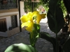 pasha-garden-35
