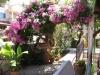 pasha-garden-4