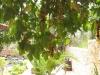 pasha-garden-55