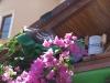 pasha-garden-7